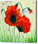 Poppies In The Wild Acrylic Print
