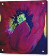 Poppies Nod To O'keefe Acrylic Print