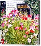 Poppies On Niagara Street Acrylic Print by David Lloyd Glover