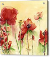 Poppies On Parade Acrylic Print