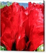 Poppies Plus Acrylic Print