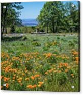 Poppies With A View At Oak Glen Acrylic Print