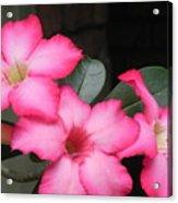 Poppin Pink Flowers Acrylic Print