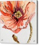 Poppy #2 Acrylic Print