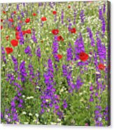 Poppy And Wild Flowers Meadow Nature Scene Acrylic Print