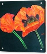Poppy Bud And Bloom Acrylic Print