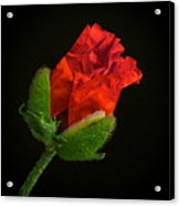 Poppy Bud Acrylic Print by Toni Chanelle Paisley