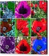 Poppy Collage Acrylic Print