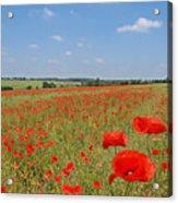 Poppy Fields 1 Acrylic Print