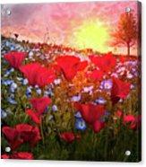 Poppy Fields At Dawn Acrylic Print