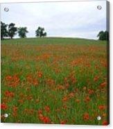 Poppy Fields In Suffolk Acrylic Print
