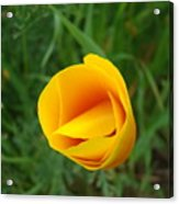 Poppy Flower Bud 9 Orange Poppies Green Meadow Art Prints Baslee Troutman Acrylic Print