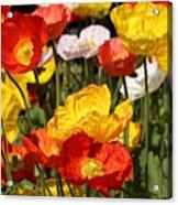 Poppy Flower Garden Acrylic Print