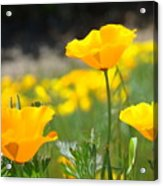Poppy Flower Meadow 11 Poppies Art Prints Canvas Framed Acrylic Print