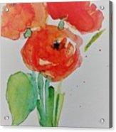 Poppy Flowers 1 Acrylic Print