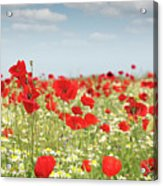 Poppy Flowers Field Nature Spring Scene Acrylic Print
