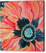 Poppy For A New Day Acrylic Print