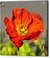Poppy - Id 16235-142749-5072 Acrylic Print