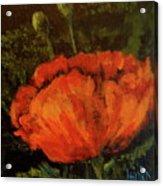 Poppy IIi Acrylic Print