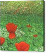 Poppy In Country Acrylic Print