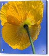 Poppy In The Sky Acrylic Print by Kathy Yates