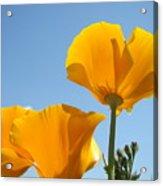 Poppy Landscape Poppies Flowers Blue Sky 12 Baslee Troutman Acrylic Print