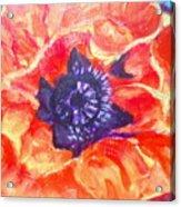 Poppy Love  Acrylic Print