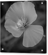 Poppy Monochrome Macro Acrylic Print