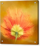 Poppy On Fire Acrylic Print