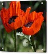 Poppy Pair Acrylic Print