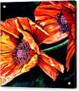 Poppy Passion Acrylic Print