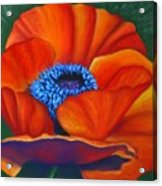 Poppy Pleasure Acrylic Print