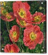 Poppy Portrait Acrylic Print