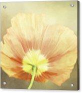 Poppy Whisper Acrylic Print