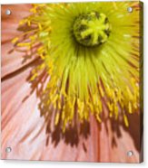 Poppy Whorls 2 Acrylic Print