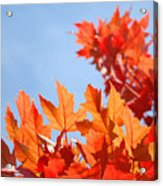 Popular Autumn Art Red Orange Fall Tree Nature Baslee Troutman Acrylic Print