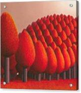 Populus Flucta Acrylic Print