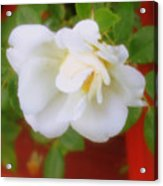 Porch Rose Acrylic Print