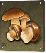Porcini Mushrooms Acrylic Print by Marshall Robinson
