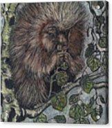 Porcupine In Aspen Acrylic Print