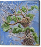 Porcupine In Cottonwood Acrylic Print