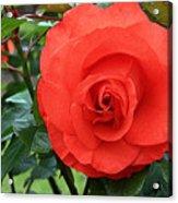 Portland Rose Garden Acrylic Print