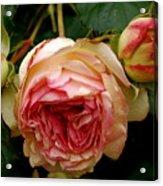 Portland's Rose Garden Acrylic Print