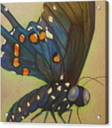 Portrait Of A Butterfly Acrylic Print