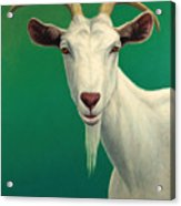Portrait Of A Goat Acrylic Print by James W Johnson