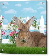 Portrait Of A Gregarious Brown Bunny Acrylic Print