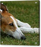 Portrait Of A Greyhound - Soulful Acrylic Print
