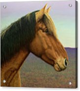 Portrait Of A Horse Acrylic Print by James W Johnson