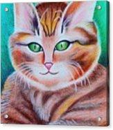 Portrait Of A Kitten Acrylic Print
