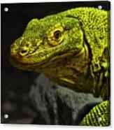 Portrait Of A Komodo Dragon Acrylic Print